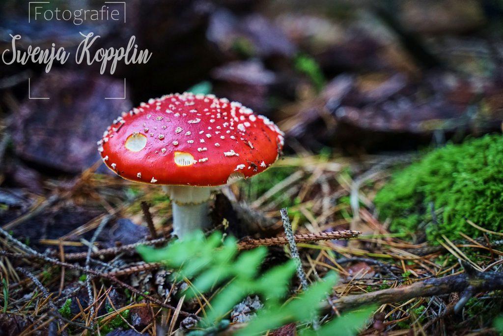 natur fotografie bunt herbst wälder pilz bäume